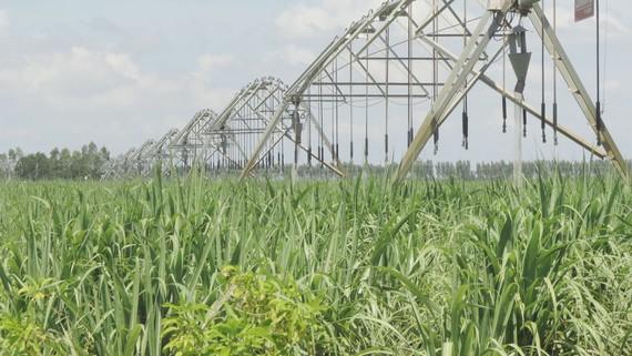 Tây Ninh đột phá đầu tư phát triển nông nghiệp