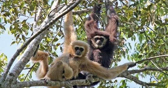 高域猿生態保護區。