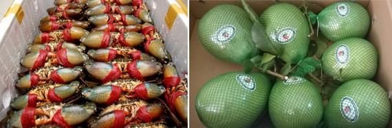 金甌螃蟹和綠皮柚。(示意圖源:互聯網)