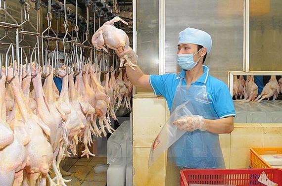 雞肉產品包裝工段一瞥。(圖源:安孝)