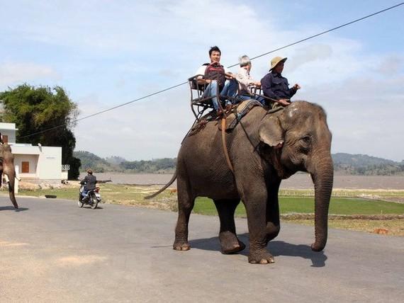遊客騎大象參觀。(圖源:越通社)