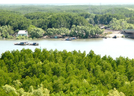 Can Gio district has advantages to develop ecotourism (Photo: SGGP)