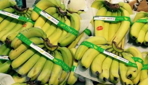 Banana for exports