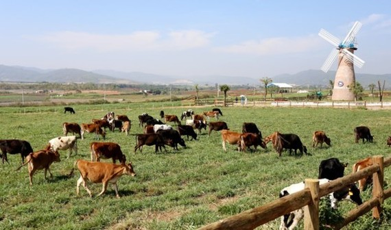 Organic Da Lat farm, the first one meeting European standards in Vietnam (Photo: SGGP)