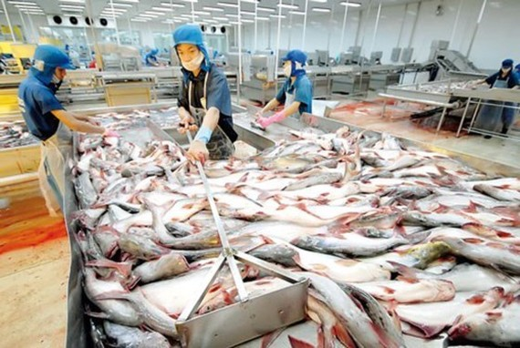 A Pangasius fish processing plant in the Mekong Delta (Photo: SGGP)