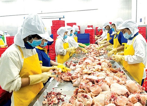 Workers processing chicken to supply the market stabilization program at a plant of Ba Huan Company in Long An province (Photo: SGGP)