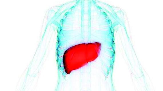 Phát hiện protein mới chống ung thư gan