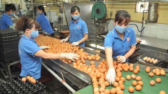Sản xuất trứng cung ứng bình ổn thị trường tại Công ty Vĩnh Thành Đạt. Ảnh: CAO THĂNG