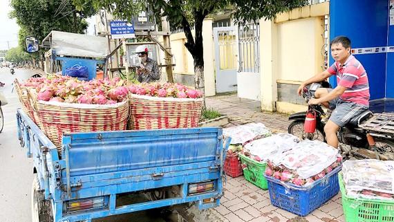 Anh Nguyễn Văn Trực chở hàng đến cơ sở thu mua thanh long để bán, dù bị ép dạt hàng