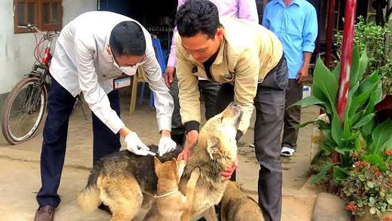 Tiêm vaccine phòng dại đầy đủ cho chó nuôi để phòng ngừa lây nhiễm bệnh dại sang người