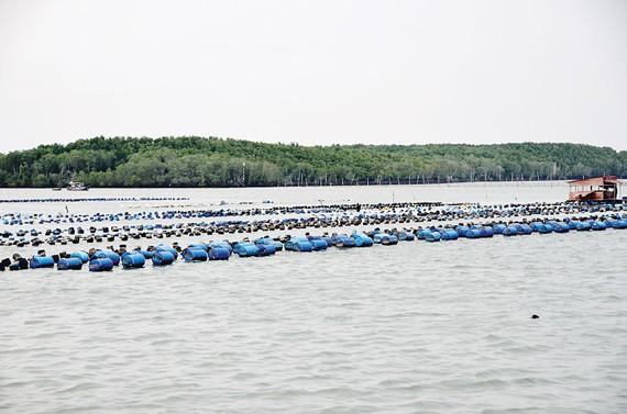Khu vực quy hoạch nuôi hàu trước gò Con Chó ở xã đảo Thạnh An