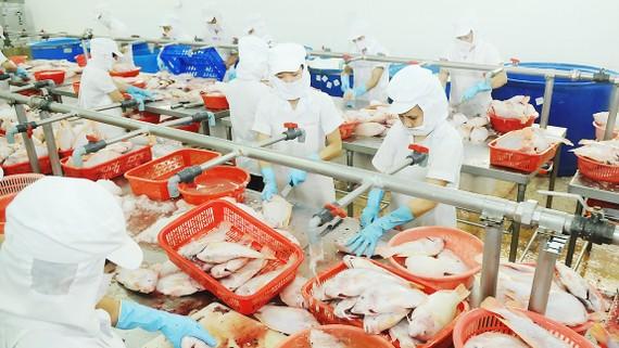 Chế biến cá xuất khẩu tại Công ty APT                  Ảnh: CAO THĂNG
