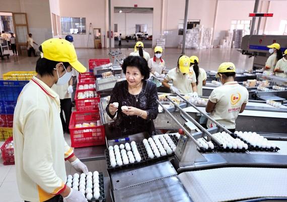 Dây chuyền sản xuất trứng của Công ty Ba Huân