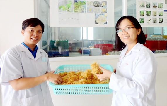 TS Hà Thị Loan cùng đồng nghiệp thu hoạch rễ tóc sâm Ngọc Linh nuôi cấy trong phòng thí nghiệm