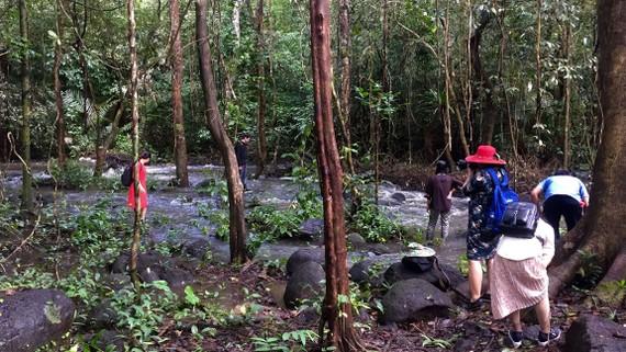 Suối giữa rừng Cát Tiên