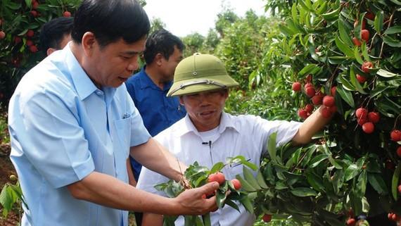 Bộ trưởng Bộ NN-PTNT Nguyễn Xuân Cường đi thăm vườn vải thiều tại tỉnh Hưng Yên