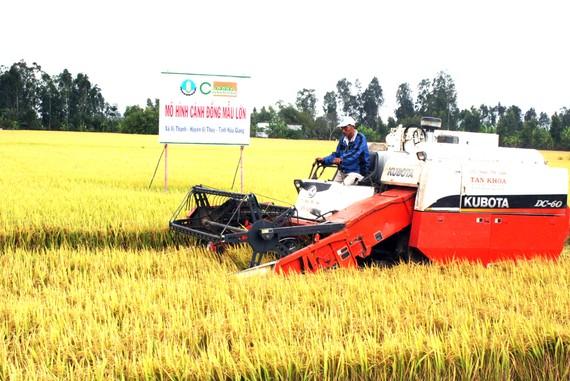 Ứng dụng công nghệ cao tạo sức bật cho nông sản