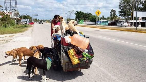 5 năm, giải cứu hơn 400 con chó