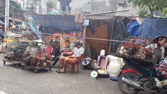 Các điểm kinh doanh gia cầm tự phát trên đường phố