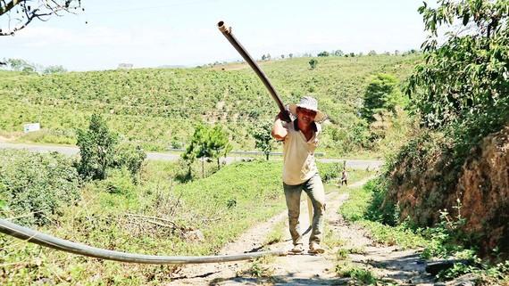 Người dân thôn Phú Ao, xã Tà Hine, huyện Đức Trọng (tỉnh Lâm Đồng) kéo ống  lên đồi cao đưa nước về tưới cà phê. Ảnh: ĐOÀN KIÊN