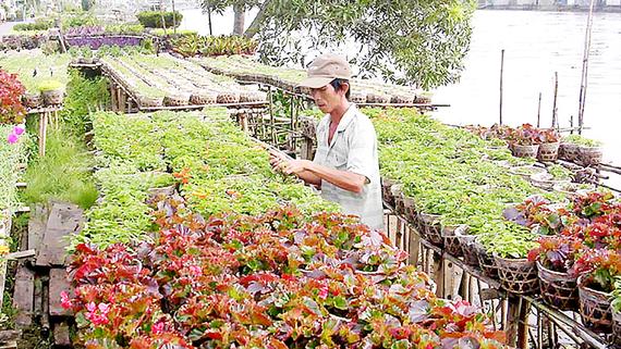 Sản xuất hoa kiểng quanh năm, giúp người dân Sa Đéc khấm khá