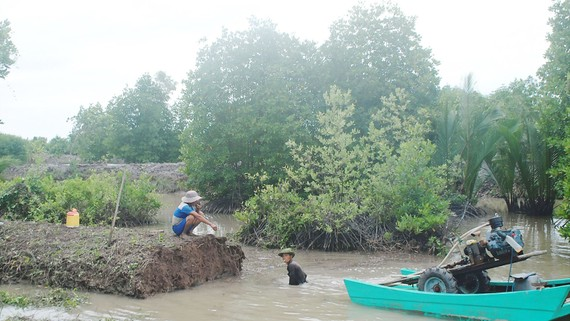 Người dân Cà Mau thường xuyên nạo vét ao tôm, nhưng không có nơi chứa đất