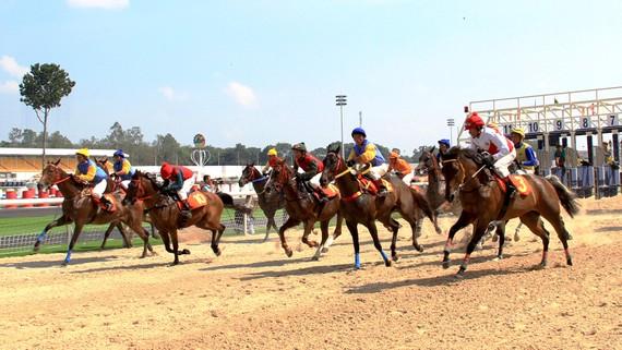 Đua ngựa ở Khu du lịch Đại Nam