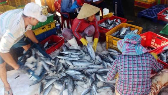 Đánh bắt cá xa bờ