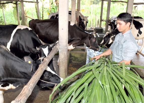 Tăng tỷ lệ bao phủ BHXH ở Việt Nam, chủ yếu là tăng số người ở khu vực lao động phi chính thức tham gia BHXH tự nguyện. Ảnh: VIỆT DŨNG