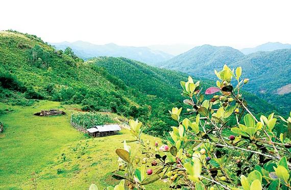 Bùi Hui có khí hậu quanh năm mát mẻ, có cây sim tự nhiên nhiều nhất Quảng Ngãi
