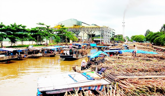 Nông dân chờ bán mía ở Nhà máy đường Phụng Hiệp (Hậu Giang)