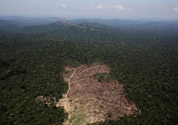 Báo động tình trạng phá rừng Amazon tại Brazil