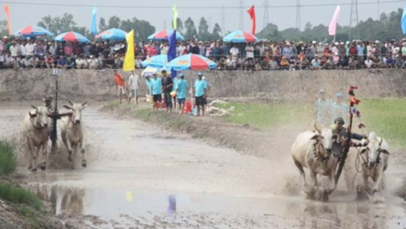 Bay Nui ox racing festival takes place in Chau Doc City