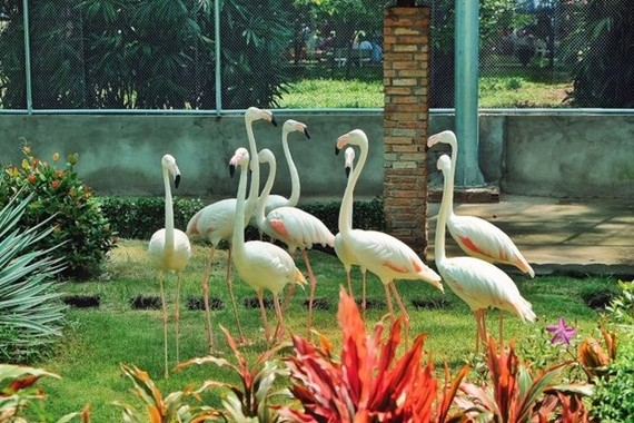 The new Flamingo Garden at the Sai Gon Zoo and Botanical Gardens in HCM City's District 1 (Photo: tuoitre.vn)
