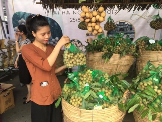 Farmers harvest longan production