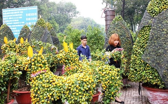 HCMC people prepare bonsai flowers for Tet