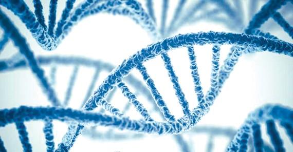 Phát hiện thêm 72 biến thể gien