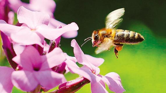 EU cấm sử dụng thuốc trừ sâu ngoài trời