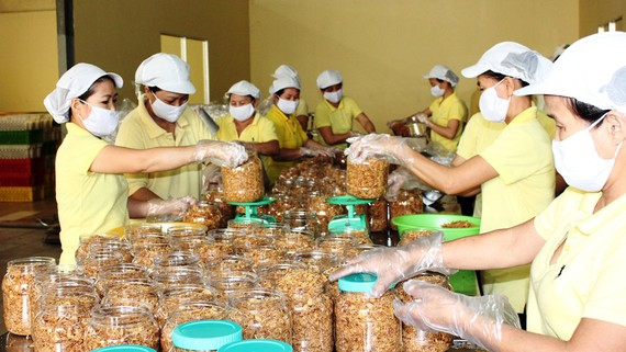 Công nhân đóng gói sản phẩm các loại chuẩn bị xuất khẩu sang Mỹ
