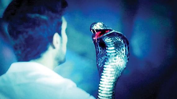 Tình người kiếp rắn
