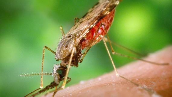 Bệnh nhi tử vong do sốt rét tăng mạnh