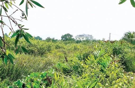 Đất nông nghiệp sinh thái vườn ở Long Phước, quận 9 được rao bán 7 triệu đồng/m2 được mua bán công khai đã xé nát quy hoạch chung. Ảnh: M. TUẤN
