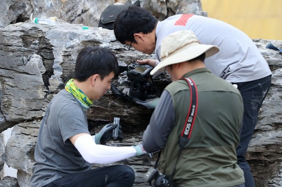 Ổ kiến này được phát hiện ngày 18-9 trong những tảng đá cảnh quan được nhập từ Trung Quốc. Ảnh: Yonhap