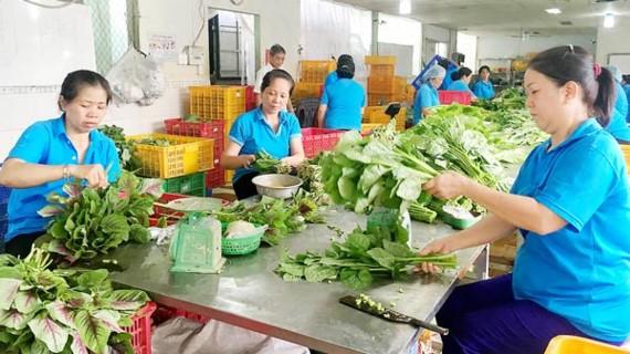 Thành viên HTX Phước An sơ chế rau