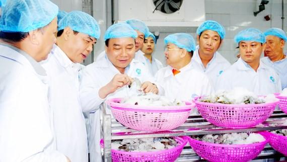 Thủ tướng Nguyễn Xuân Phúc thăm Nhà máy chế biến tôm Minh Phú ở Cà Mau