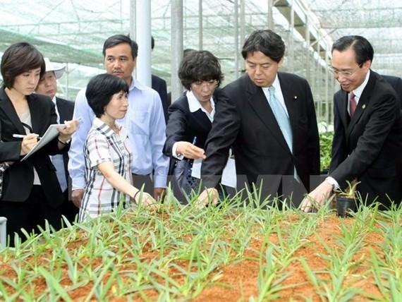 Ngại rủi ro khi cho vay đầu tư nông nghiệp công nghệ cao