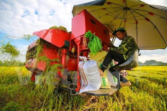Nông dân Đồng bằng sông Cửu Long thu hoạch lúa.
