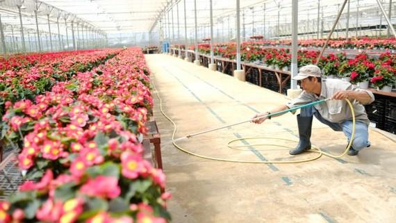 Đa số các doanh nghiệp đầu tư nông nghiệp công nghệ cao đều gặp khó khi tiếp cận quỹ đất - Ảnh: M.VINH