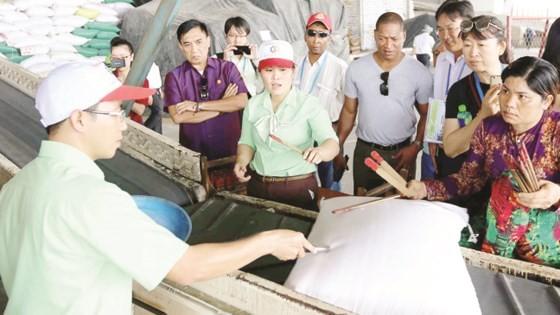 Đại biểu các nền kinh tế thành viên APEC tham quan hoạt động chế biến gạo tại ĐBSCL