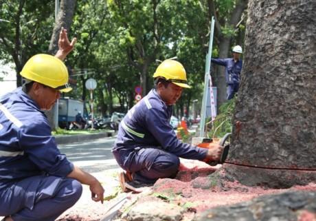 Di dời 14 cây xanh trên đường Tôn Đức Thắng